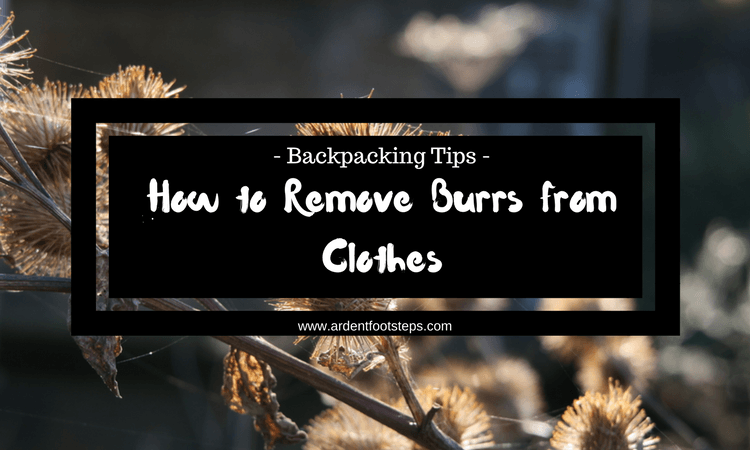 The Green, Small and The Annoying – How to Remove Burrs from Clothes